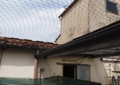 Reti anti piccioni Firenze Pistoia Quarrata