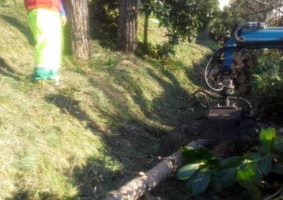 Abbattimento alberi Firenze e Quarrata