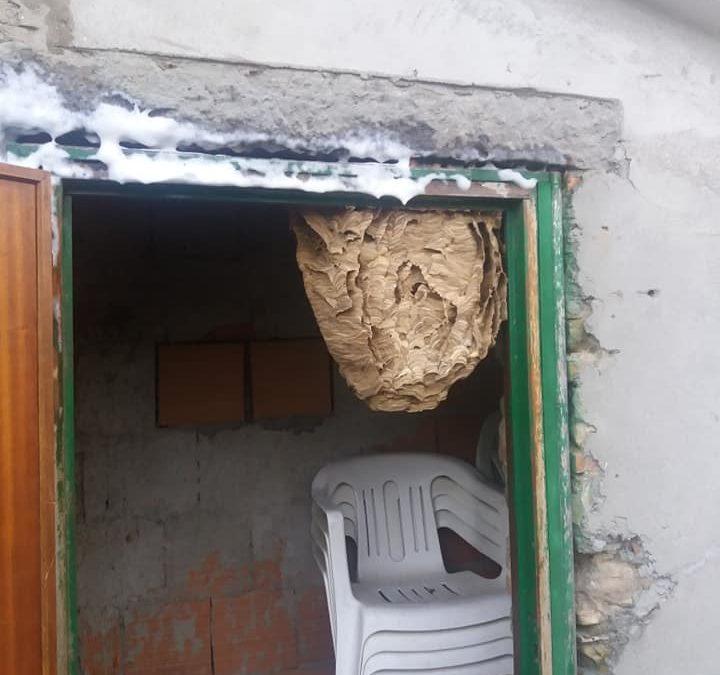 Rimozione nido di Tafani